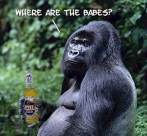 gorilla-drinking-beer-604